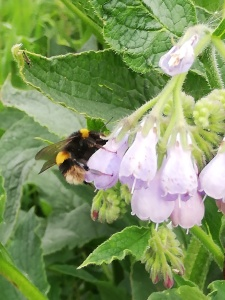 a bee sitting on a purple flower with most of the image featuring green leaves